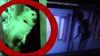 Scary Ghost Prank| Dog Watching Horror videos | Funny Reaction