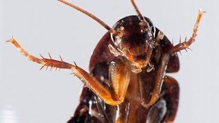 Bugs Living Inside Your Ears? Spiders and Cockroaches Living Inside Humans
