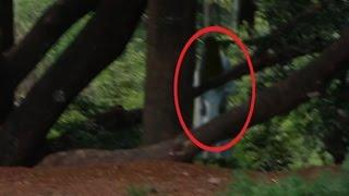BEST Ghost Video 2016 II Real Ghost Caught on TAPE Under a Huge Haunted Tree II Scary Videos 2016