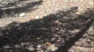 """Bennettville California Part 2 - """"A Trail With A View"""""""