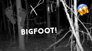 BEYOND FISHER HILL CEMETERY - Coyotes, Bigfoot Tree Structures, Orbs, Strange Sounds
