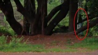 Real Ghost Sightings | Ghost Caught On Tape | Paranormal Activity Scary Ghost Videos