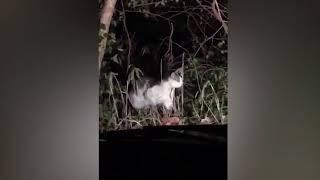 Misterioso gato aparece de la nada para guiar a japoneses perdidos a través de un peligroso bosque