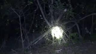 SALT FORK STATE PARK BIGFOOT VIDEO INVESTIGATION PART 2 (TREE STRUCTURES, STRANGE SOUNDS,)