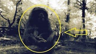 Mysterious Ape Island Part 1